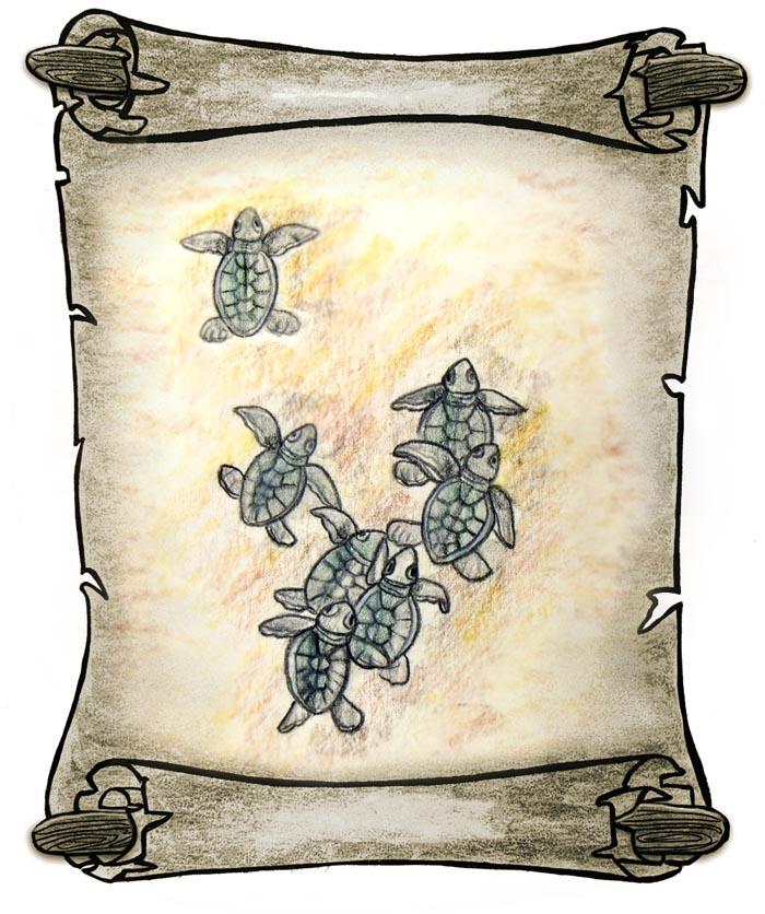 Malaysia - Turtle Islands